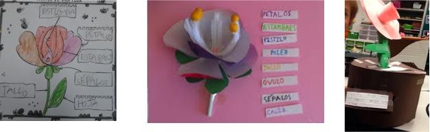 partes-de-una-flor